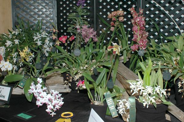 exhibitor display